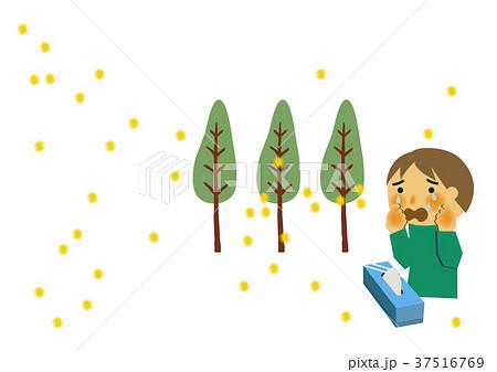 花粉症と杉のイラスト。アレルギーのイメージイラスト。 37516769