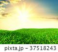 背景 草 野原のイラスト 37518243