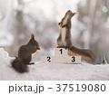 動物 可愛い 愛らしいの写真 37519080