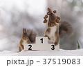 動物 可愛い 愛らしいの写真 37519083