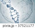 遺伝子 DNA 水分のイラスト 37521177