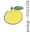 ゆず スダチ フルーツのイラスト 37521728