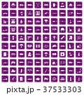 37533303