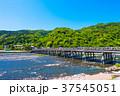新緑の渡月橋と桂川 37545051