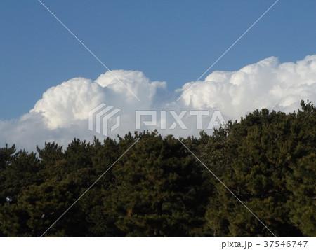 稲毛海浜公園の青空と白い雲 37546747