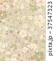 桜 春 模様のイラスト 37547323