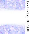 桜 春 フレームのイラスト 37547351