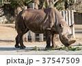 動物 哺乳類 横の写真 37547509