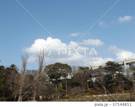 千葉公園の青空と白い雲 37548851