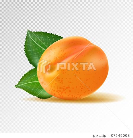 Vector ripe orange apricot on transparent 37549008