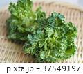 プチヴェール 緑黄色野菜 37549197