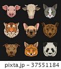 動物 頭 ブタのイラスト 37551184