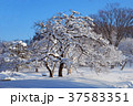 雪 積雪 樹木の写真 37583351