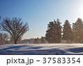 東京の雪の日 37583354