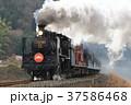 山口線を走るSL津和野稲成号 37586468