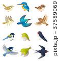 鳥 37589069