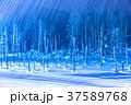 青い池 ライトアップ 夜景の写真 37589768