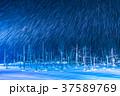 青い池 ライトアップ 夜景の写真 37589769