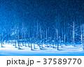 青い池 ライトアップ 夜景の写真 37589770