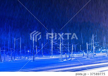 《北海道》青い池のライトアップ・美瑛町 37589775