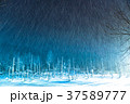 青い池 ライトアップ 夜景の写真 37589777