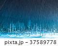 青い池 ライトアップ 夜景の写真 37589778