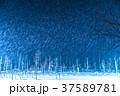 青い池 ライトアップ 夜景の写真 37589781