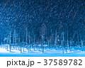 青い池 ライトアップ 夜景の写真 37589782
