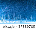 青い池 ライトアップ 夜景の写真 37589785