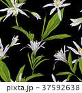 絵 花 自然のイラスト 37592638