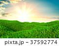自然 草 空のイラスト 37592774
