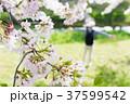男性 リュック 花の写真 37599542