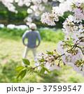 男性 散歩 人物の写真 37599547
