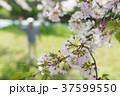 男性 呼ぶ 花の写真 37599550