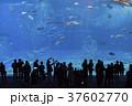 美ら海水族館の巨大水槽 37602770