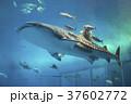ジンベイザメ 魚 水族館の写真 37602772