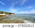 海 ビーチ 海岸の写真 37602813