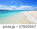 海 ビーチ 砂浜の写真 37605647
