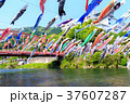 端午の節句 川を泳ぐ鯉のぼり 佐賀川上峡 37607287