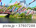 端午の節句 川を泳ぐ鯉のぼり 佐賀川上峡 37607288