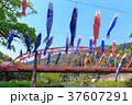 端午の節句 川を泳ぐ鯉のぼり 佐賀川上峡 37607291