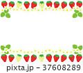苺 果物 果実のイラスト 37608289