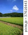 水田 青空 空の写真 37616443