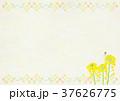 菜の花 蝶 モンシロチョウのイラスト 37626775