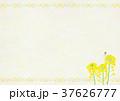 菜の花 蝶 モンシロチョウのイラスト 37626777