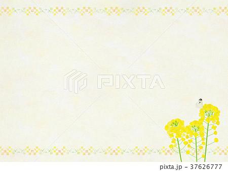 背景素材_菜の花と蝶 37626777