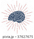 ブレイン 脳 脳みそのイラスト 37627675