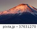 富士山 夜明け 朝日の写真 37631270