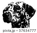 犬 狗 わんこのイラスト 37634777