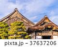 日本の風景 京都 秋の二条城(二の丸御殿) 37637206
